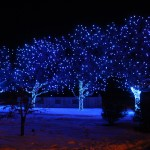 Holiday Lights at Chatfield DBG, in front of dye garden