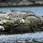 Sea lions, on whale-watching trip
