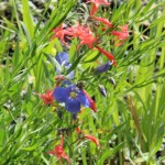 Flowers near Gothic