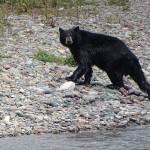 wet-bear-3